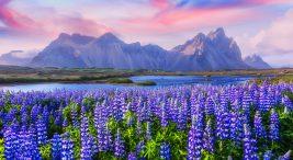 İzlanda'yı Kim Kurdu ? İzlanda, özellikle doğal güzellikleriyle turistik açıdan önemli bir ülkedir..