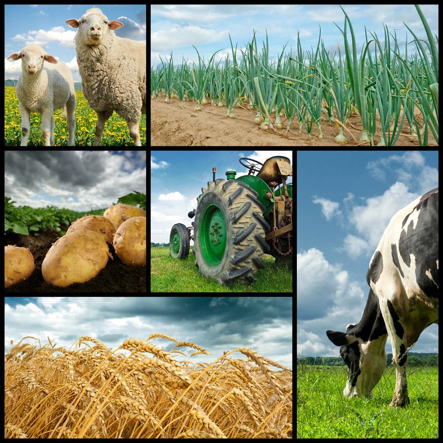 Tarım ve Orman Bakanlığı Tarihçesi